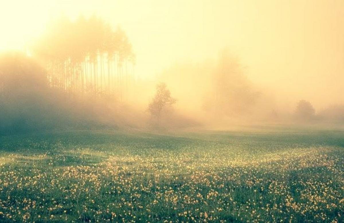 "Pic.: ""Misty Morning Premade"" by IsabellWeise"