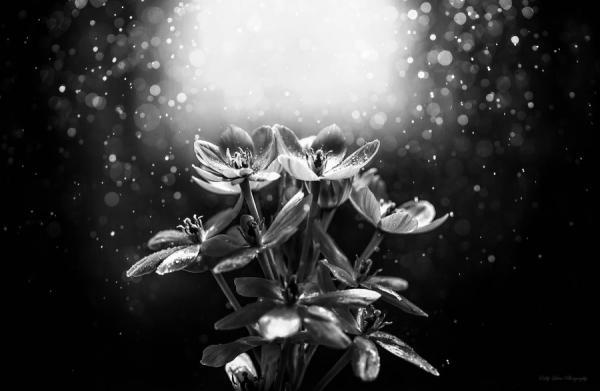 MeoŞiir - Son Çiçek