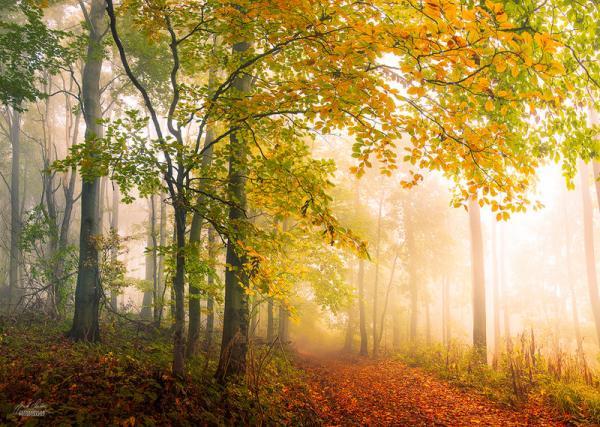MeoŞiir - Sonbaharın Endişeli Şiirleri