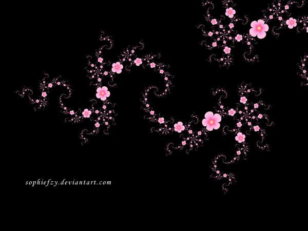 MeoŞiir - Erik Çiçeği
